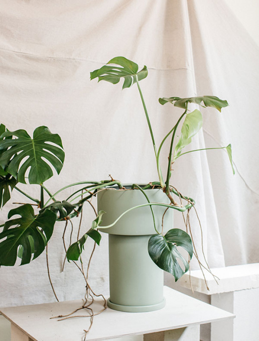 The Plant Society X Capra Designs Create The Perfect Indoor Planter