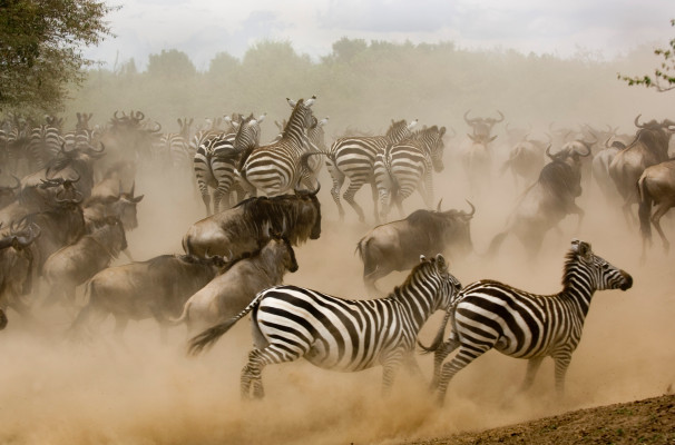 The Zebra raises $38.5M as the insurance marketplace race heats up – TechCrunch